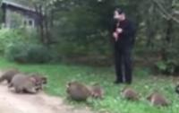 Американец приманил десятки енотов игрой на флейте (видео)