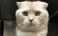 Кот по почте: Мужчина хотел вернуть животное в приют
