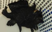 В Австралии поймали страшную рыбу с тремя ногами