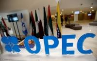Власти Саудовской Аравии рассматривают вопрос о роспуске ОПЕК