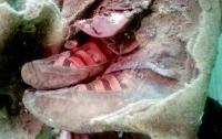 Археологи нашли 1500-летнюю мумию в кроссовках