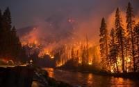 В России решили не тушить лесные пожары, так как это дешевле