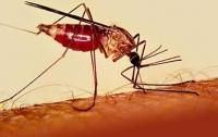 В Конотопе мужчина умер от малярии