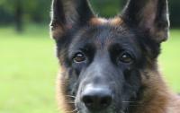 Собака вызвала «скорую» и спасла хозяина