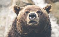 Драку двух медведей барибала попала на видео