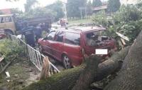 Жуткие последствия грозы во Львове: поваленные деревья и оборванные провода