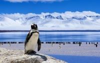 Ученые случайно наткнулись на 1,5-миллионную колонию пингвинов