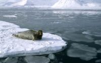 Северный Ледовитый океан может остаться без льда