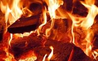 Под Киевом выгорело 12 гектаров леса из-за незатушенного костра