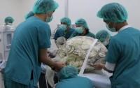 Умерла черепаха, проглотившая 915 монет