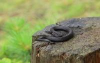 Змеи стали очень активны на Львовщине