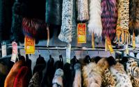 В США начали вводить запрет на изделия из меха животных
