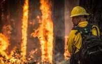 На юге Турции вспыхнули лесные пожары: сотни людей пострадали