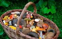 На Харьковщине туристы отравились грибами