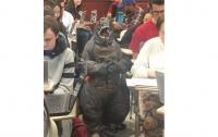 Необычный урок: в США преподаватель привела на занятия сына в костюме Годзиллы