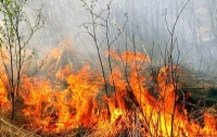 Женщина жгла траву и сгорела сама