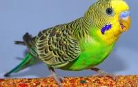 Женщина узнала об измене супруга от попугая