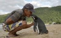 Пингвин ежегодно проплывает 5 тыс. км, чтобы встретиться со своим спасителем (ВИДЕО)