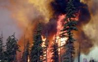 Лесной пожар в Индии унес жизни девяти людей