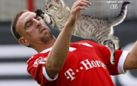 Во время ответственной игры на головах суровых футболистов появились котята (ФОТО)