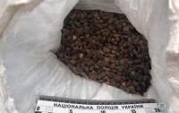 На Волыни задержан мужчина, перевозивший почти 134 кг янтаря