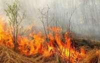 Во Львовской области во время сжигания сухой травы погибла женщина