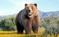Медведь забрался в дом, чтобы сыграть на пианино (видео)