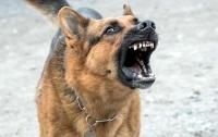 Стало известно, сколько гибнет украинцев от нападений агрессивных собак
