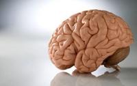 Австрийские ученые вырастили мозг «в пробирке»