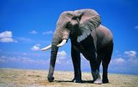 Разработана система, защищающая животных от браконьеров