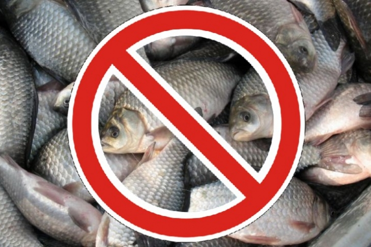 запрет на ловлю рыбы в новосибирске