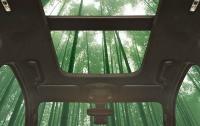 Ford планирует использовать бамбук при производстве автомобилей