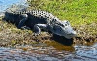 Аллигатор утащил под воду подростка