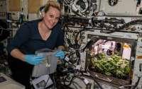 Астронавты МКС собрали первый урожай редиса и показали процесс роста на видео