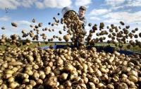 Дешевой картошки в Минагрополитики не обещают
