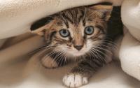 Ученые рассказали о привязанности котят к хозяевам