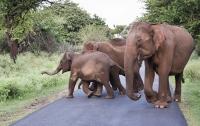 Затоптал его насмерть: в Таиланде слон напал на туриста
