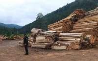 Распродавали заповедные леса: под Черновцами арестовали злоумышленников