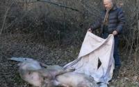 Опасных мертвецов нашли на берегу реки