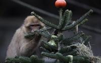 Животных в берлинском зоопарке накормили новогодними елками