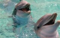 В Украине планируют начать авиаучет дельфинов в Черном море