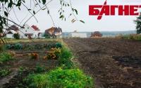 Арендовать гектар украинского  чернозема стоит примерно 350 грн. в год