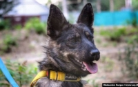 Собака моряков укусила за ногу российского силовика, который участвовал в захвате украинских кораблей