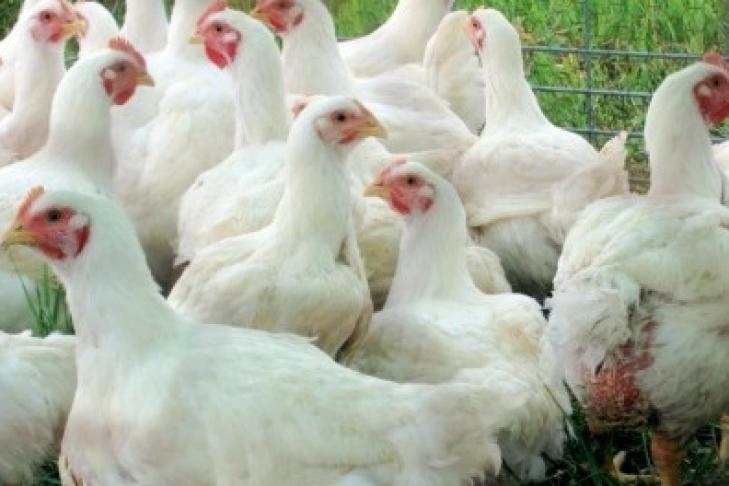 В Украину пока не будут импортировать птицу из Австрии и некоторых регионов Германии