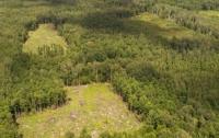 ГБР внезапно заинтересовалась вырубкой лесов на Харьковщине