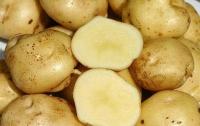 Картофель нормализует давление