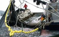 Украинский сейнер «набраконьерил» 27 тонн хамсы (ФОТО)