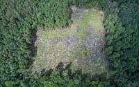Чиновники рассказали, что и как им мешает сохранить украинский лес