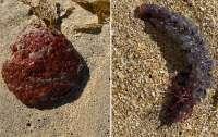 Женщина нашла на побережье загадочное и похожее на яйца существо