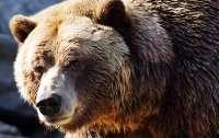Девушка случайно закрыла медведя в авто (видео)